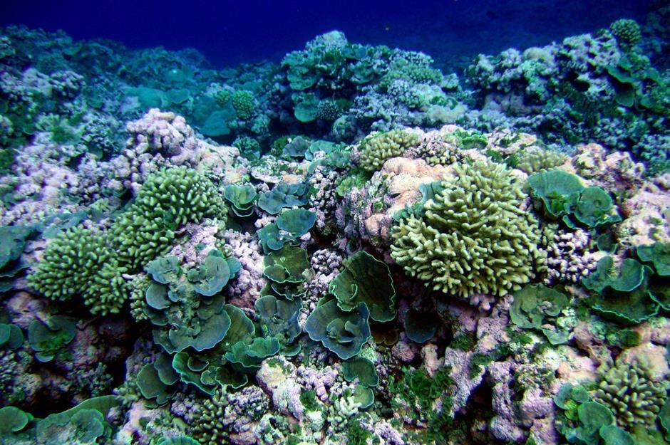 Khám phá thế giới bí ẩn nằm sâu dưới đáy đại dương