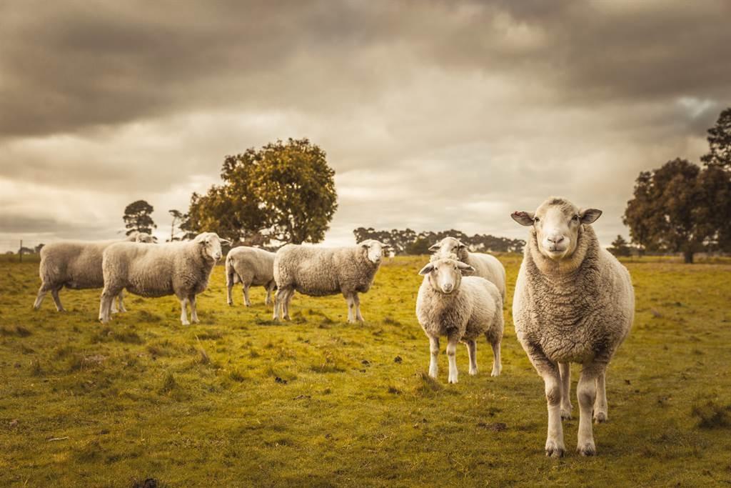 Mới nhìn tưởng UFO ngoài hành tinh, đến gần lại phát hiện bí ẩn rợn người của đàn cừu