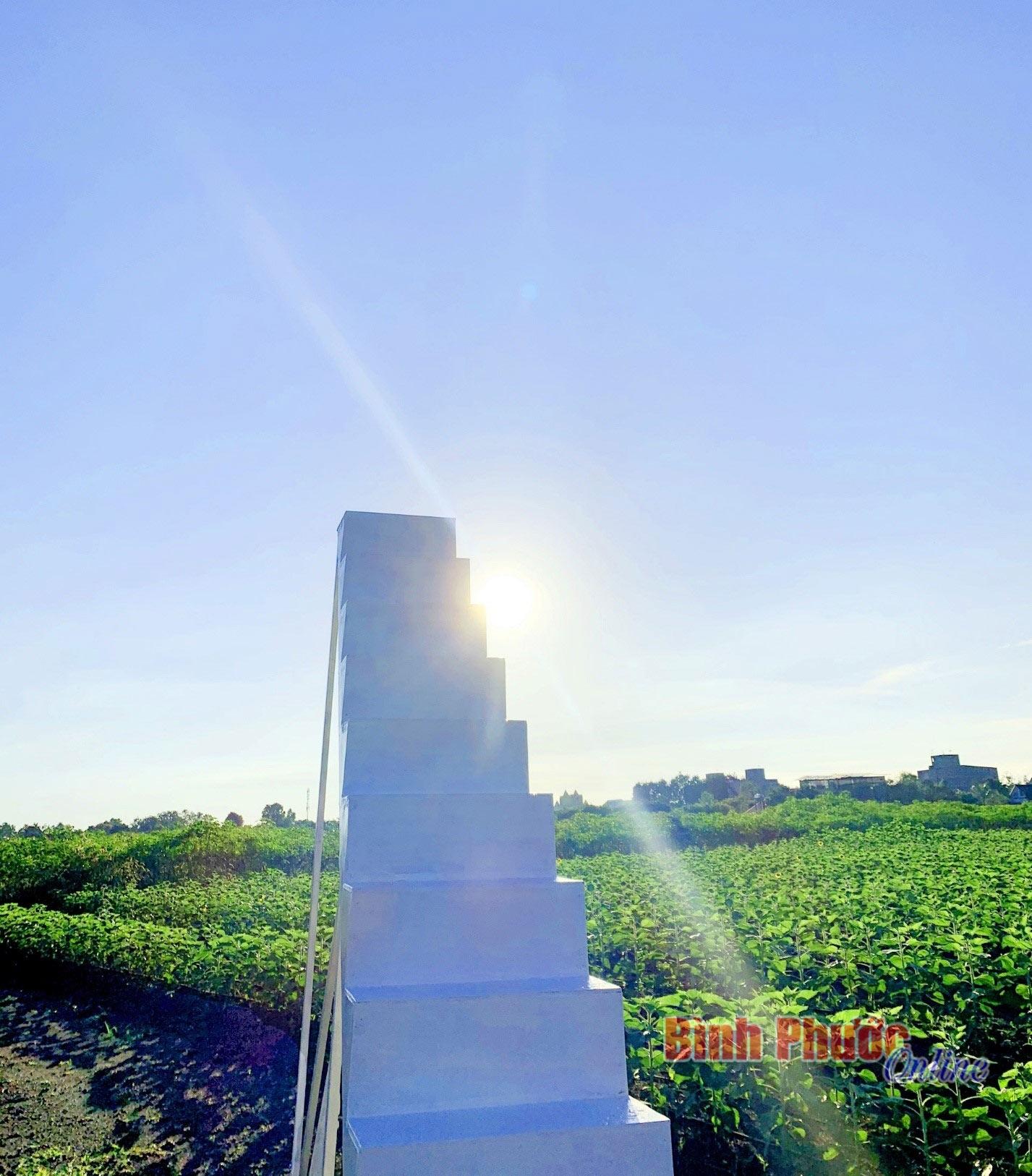 SUNFLOWER FARM: Điểm check in mới của giới trẻ Đồng Xoài