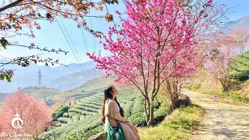 Khám phá những đồi chè đẹp và ấn tượng Việt Nam