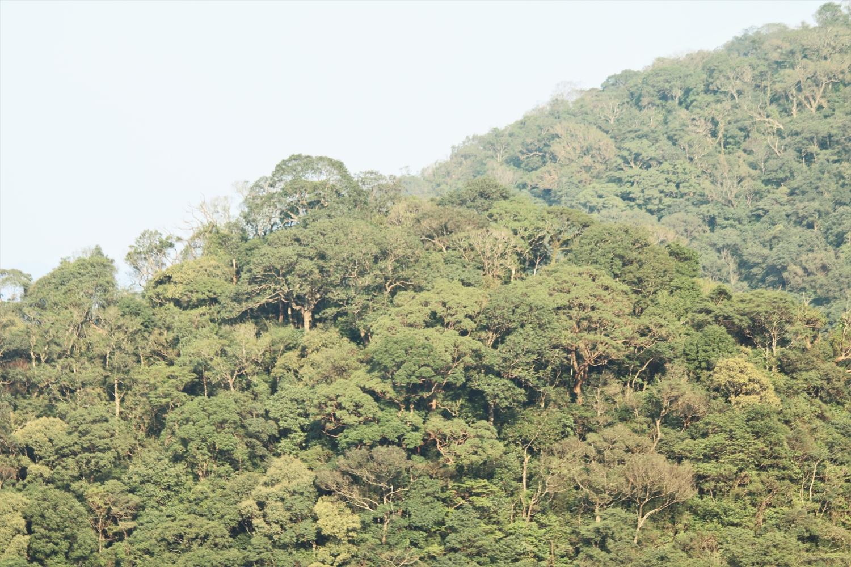 Giá trị tự nhiên độc đáo của Khu Dự trữ thiên nhiên Động Châu – Khe Nước Trong