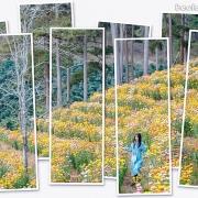 Vườn hoa bất tử níu chân du khách