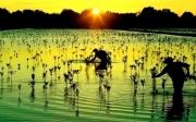 Khám phá rừng ngập mặn Cà Mau