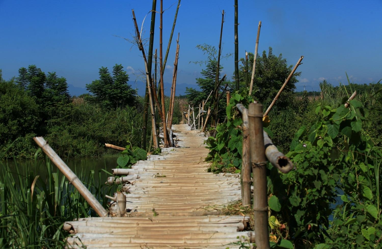 Chiếc cầu tre níu thương nhớ Cẩm Đồng