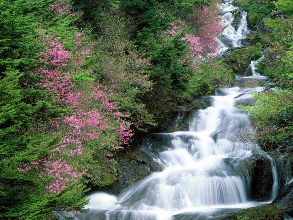 Khám phá vẻ đẹp nên thơ của Suối Tranh