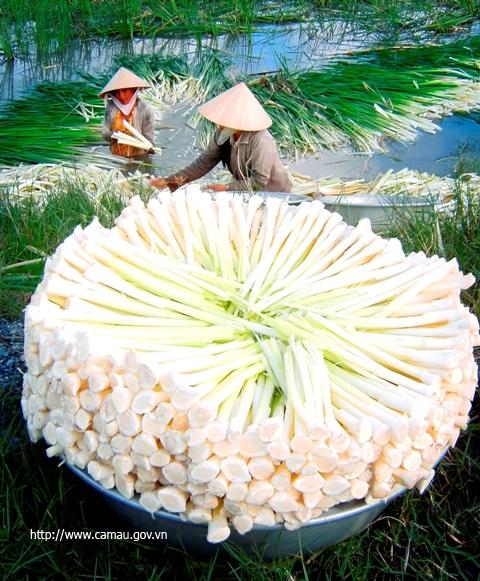 Khám phá rừng tràm U Minh Hạ