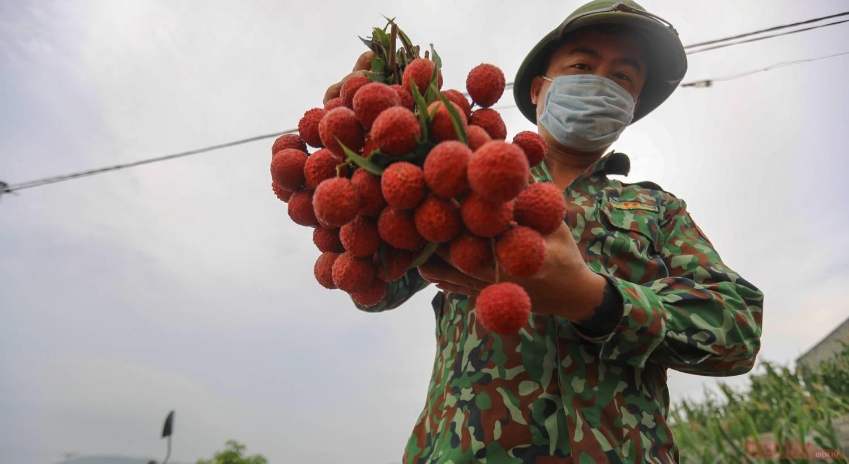 """Rực rỡ sắc đỏ tại """"vương quốc"""" vải thiều Bắc Giang"""