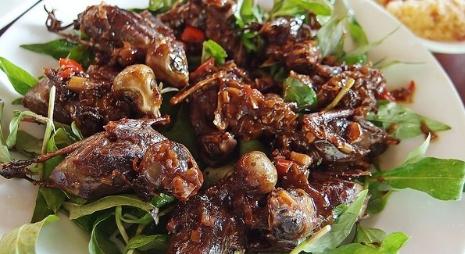 Chim mía Phú Phong