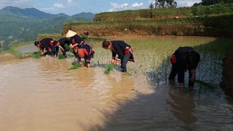 Bản Nậm Hồng (Hà Giang) – Điểm đến du lịch cộng đồng lý thú