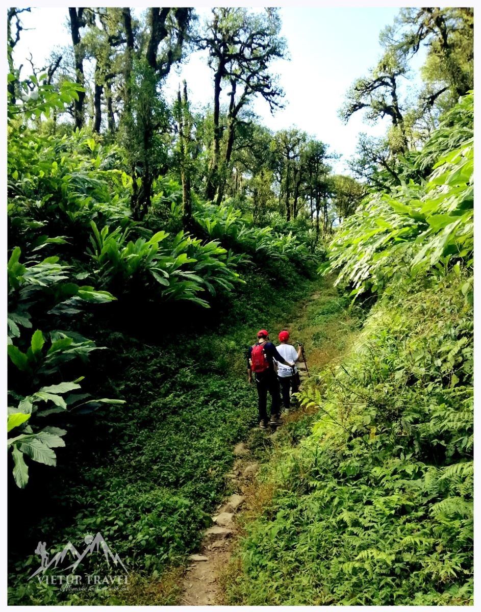 Hành trình đến đường đá cổ Pavie