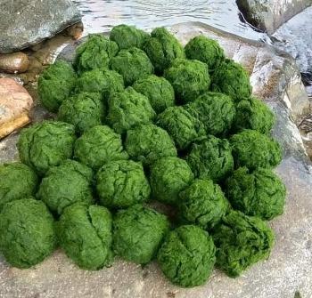 Rêu đá - Món ăn độc đáo từ núi rừng Xuân Sơn