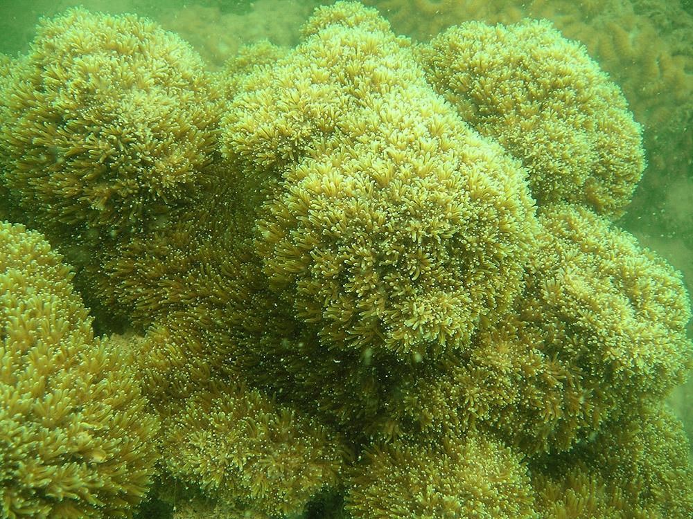 Chiêm ngưỡng san hô hồi sinh trong lòng di sản Vịnh Hạ Long