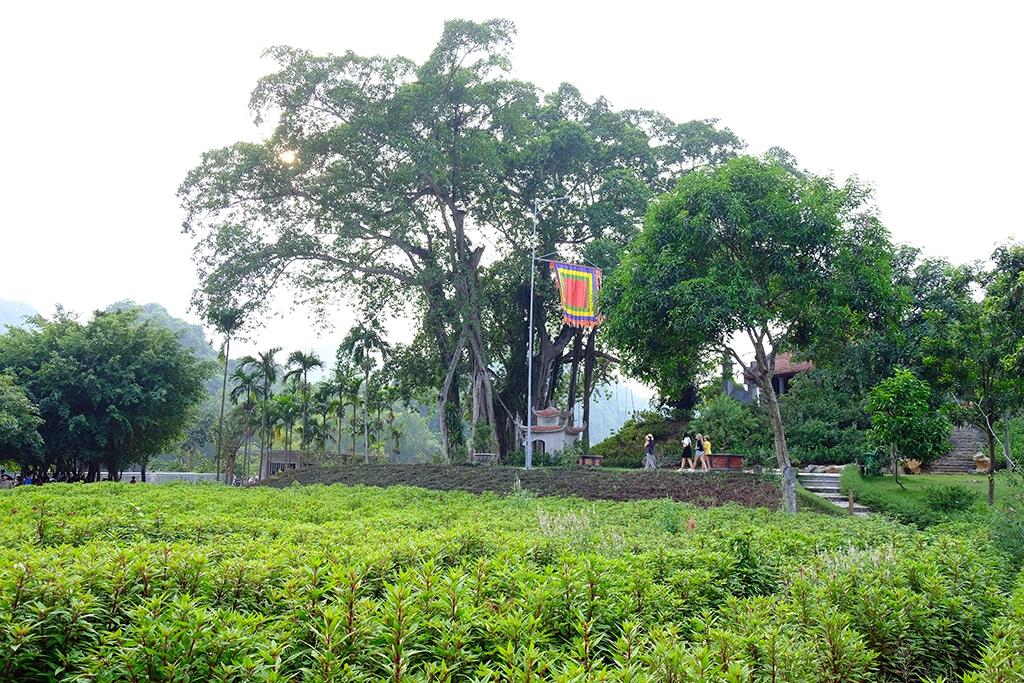 Vườn chim Thung Nham – điểm du lịch sinh thái đa dạng, ngày càng hấp dẫn của Ninh Bình