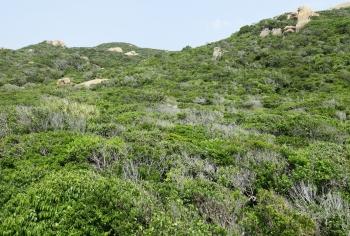 UNESCO chính thức công nhận Khu DTSQ Núi Chúa và Cao nguyên Kon Hà Nừng là khu dự trữ sinh quyển thế giới