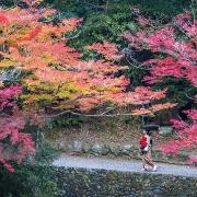 den kyoto lac loi giua rung phong la do