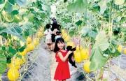 Thừa Thiên Huế: Sản xuất nông nghiệp kết hợp tham quan du lịch