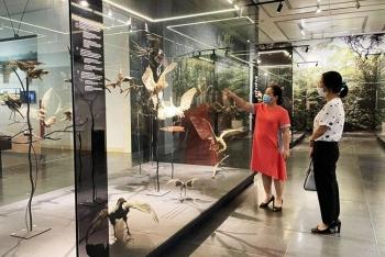 Bảo tàng đón khách trở lại trong điều kiện an toàn