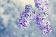 Tử vi tuần mới 10/5 - 16/5 của 12 con giáp: Tuổi Mùi công việc thuận lợi