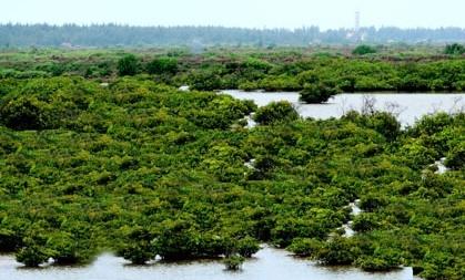 Cần chú trọng bảo vệ môi trường biển