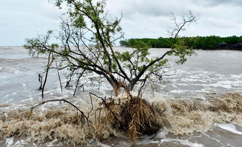 Bờ biển Đông Cà Mau sạt lở nghiêm trọng