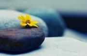 Lời Phật dạy về tham, sân, si của con người