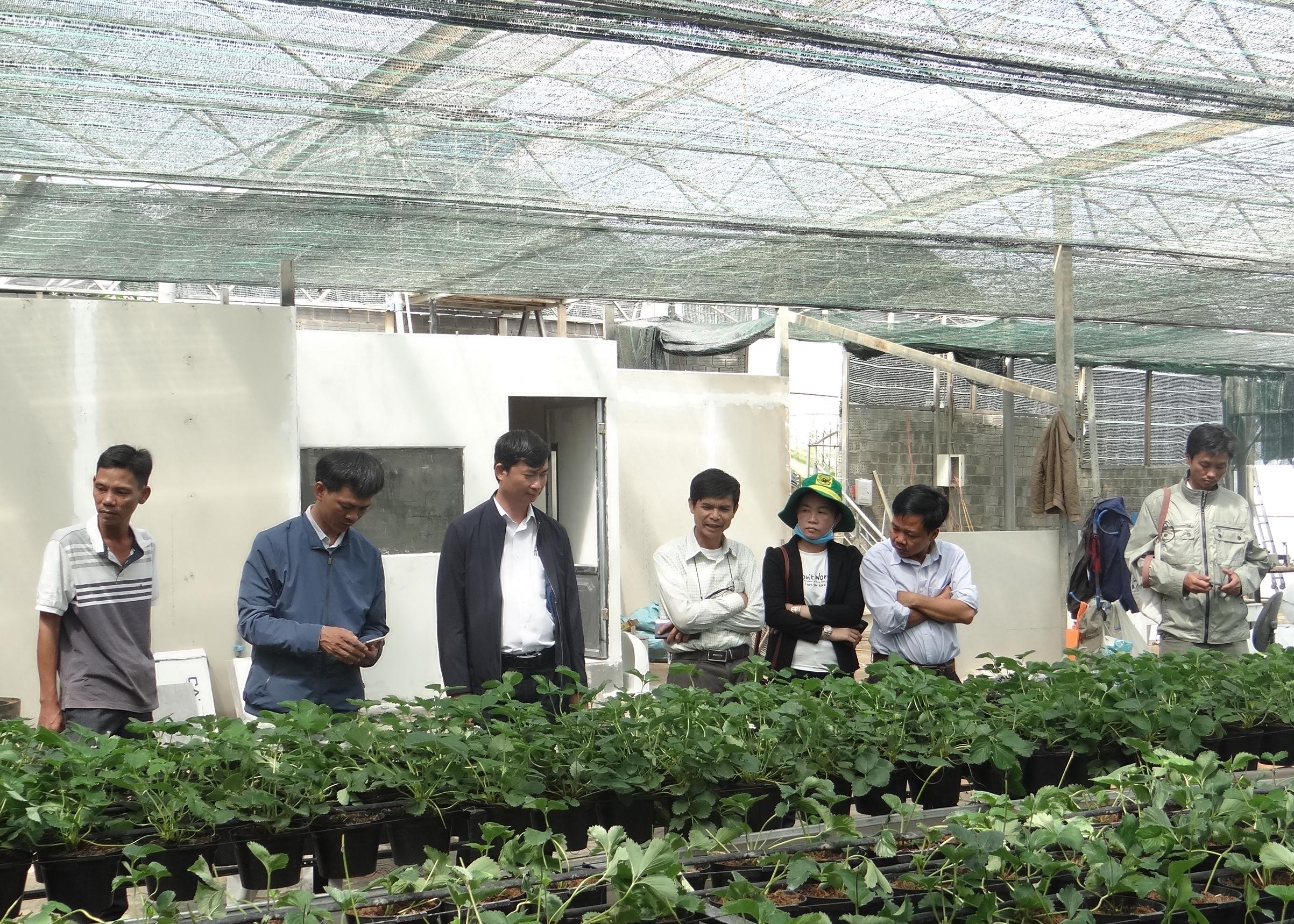 Phát triển kinh tế trang trại gắn với du lịch nông nghiệp
