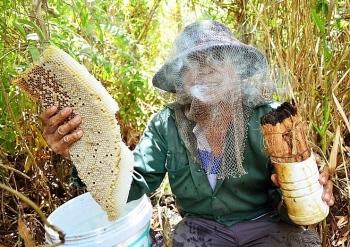 """""""Ăn ong"""" ở rừng U Minh Hạ"""