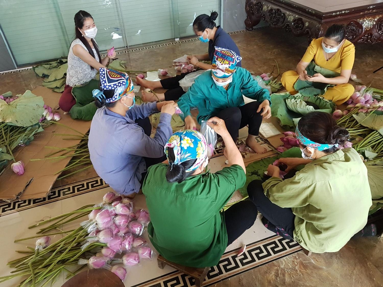 Công tác ủ hương cho chè được các công nhân hợp tác xã thực hiện