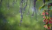 Thời tiết hôm nay 24/7/2021: Bắc Bộ mưa to; đề phòng lốc, sét, gió giật mạnh