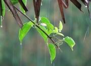 Thời tiết hôm nay ngày 27/9/2021: Các tỉnh phía Bắc mưa rào