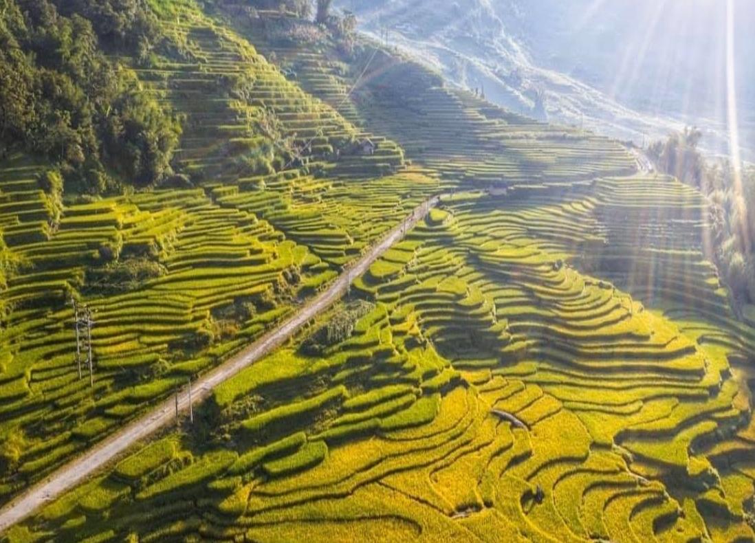Lào Cai: Thung lũng ruộng bậc thang Thề Pả mùa lúa chín