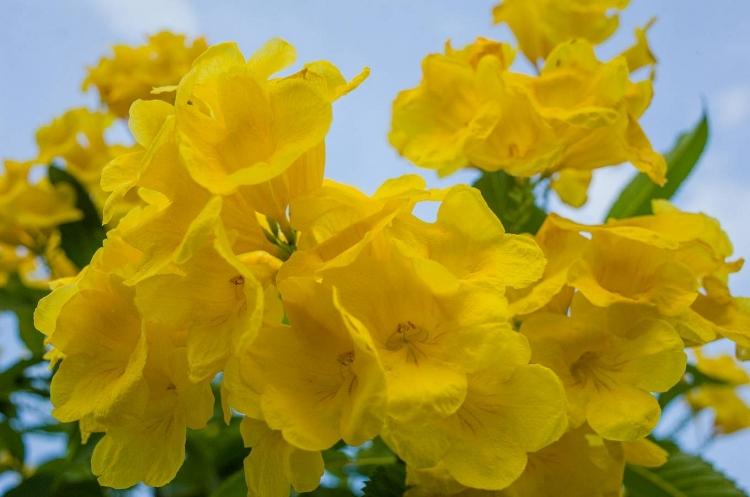 nguoi sai gon do xo toi vuon hoa hoang yen 1000 m2