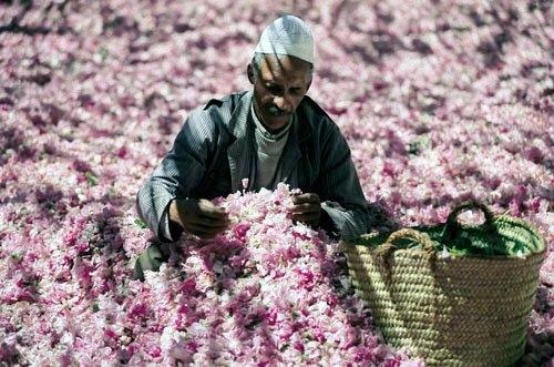 trai nghiem le hoi hoa hong mot trong nhung le hoi dep nhat ma roc
