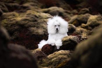 Những chú chó được chụp ảnh trong cảnh quan thiên nhiên tuyệt đẹp