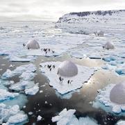 Hệ thống lều tuyết bảo vệ chim cánh cụt Hoàng đế ở Nam Cực