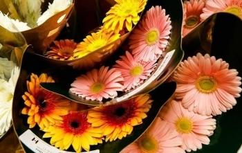 cho ban buon hoa o chicago ban ron truoc ngay le valentine