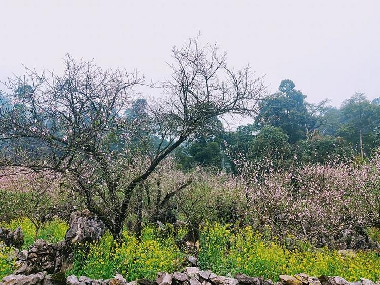 Lóng Luông thắm sắc hoa đào và bình yên đến lạ