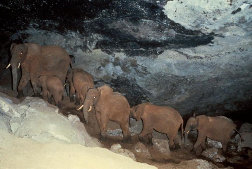 tung doan voi tu khai thac muoi de an trong hang nui lua