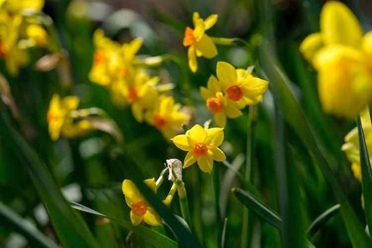 kham pha y nghia mot so loai hoa trong thoi dai nu hoang victoria