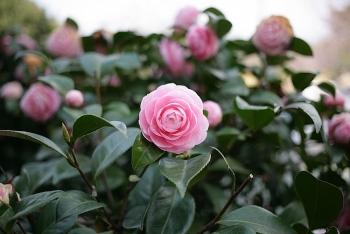 tim hieu y nghia mot so loai hoa trong thoi dai nu hoang victoria