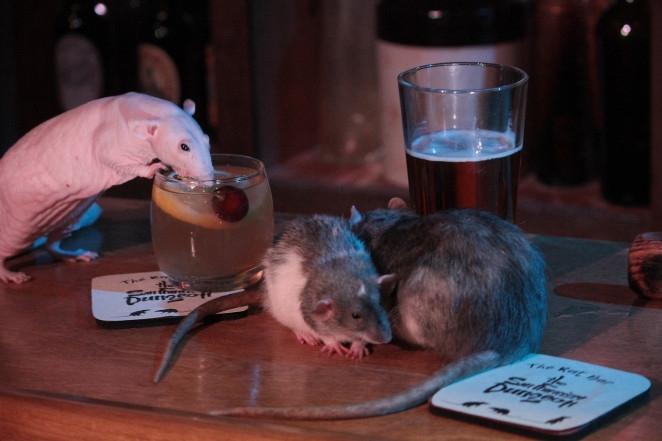 San Francisco thu hút du khách bằng quán cà phê chuột độc đáo