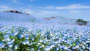 Mãn nhãn với những cánh đồng hoa đẹp ngất ngây trên thế giới