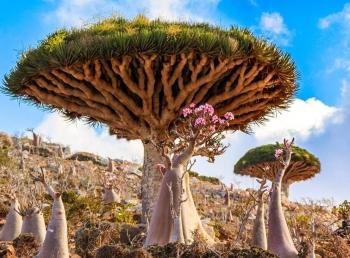 Chiêm ngưỡng những khu rừng đẹp nhất thế giới