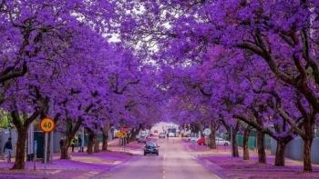 Mê mẩn trước những con đường cây đẹp nhất thế giới