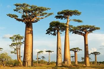 """Những loài cây """"độc lạ"""" mà bạn không thể tin chúng tồn tại trên Trái đất"""
