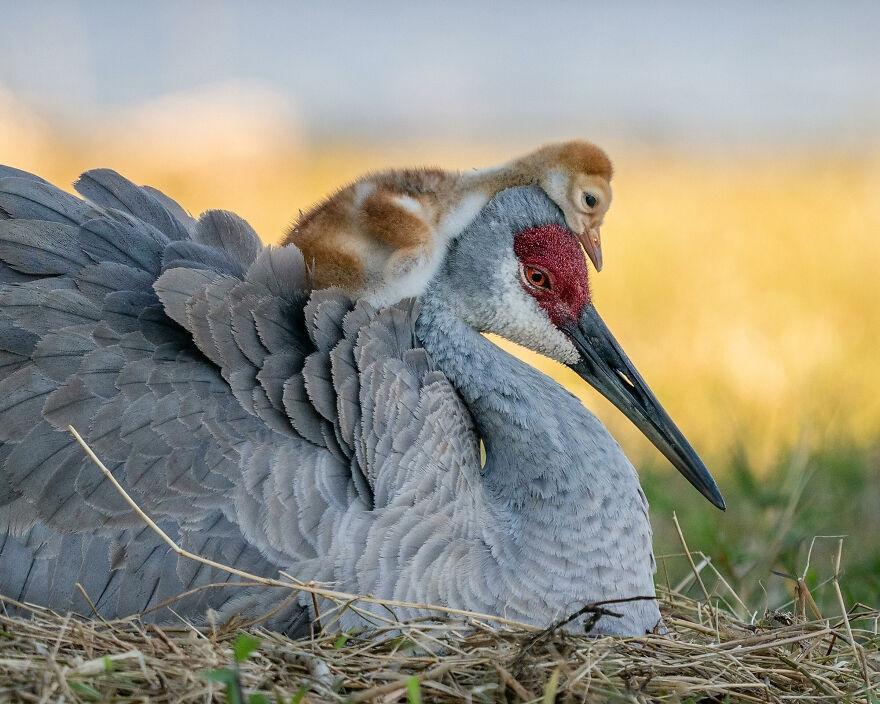 11 tác phẩm đoạt Giải thưởng Nhiếp ảnh Audubon năm 2021