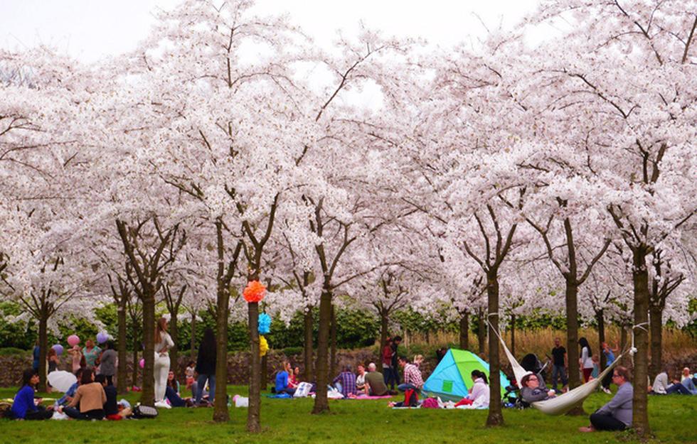 Ngoài Nhật Bản, bạn có thể tới đây để ngắm hoa anh đào