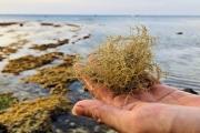 Khai thác kho tàng văn hóa biển đảo Lý Sơn