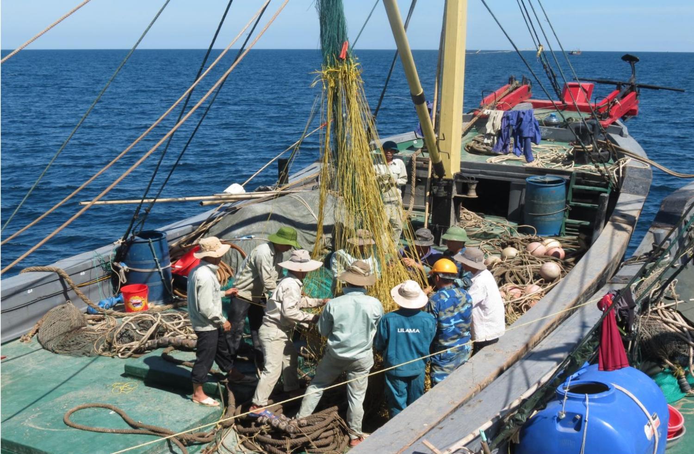 Nguyên liệu làm mắm được đánh bắt tự nhiên trên biển