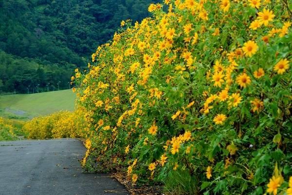 giai ma y nghia nhung loai hoa noi tieng o da lat